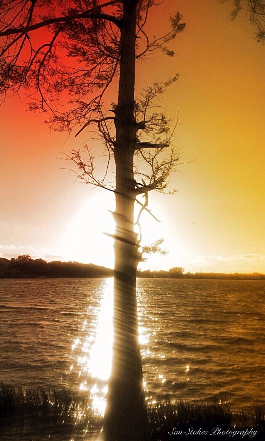 SUNSET TREE DANCE